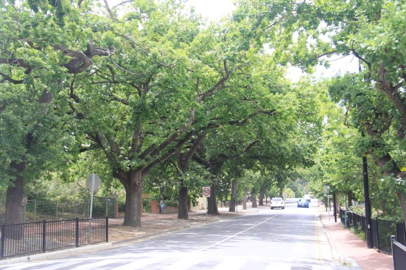 Many Oaklined trees in smaller towns