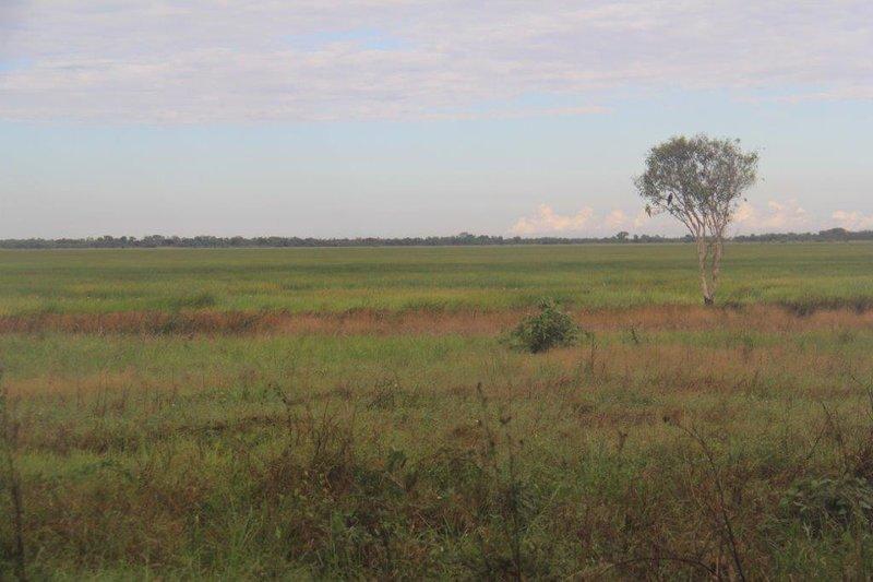 Native rice across wet lands