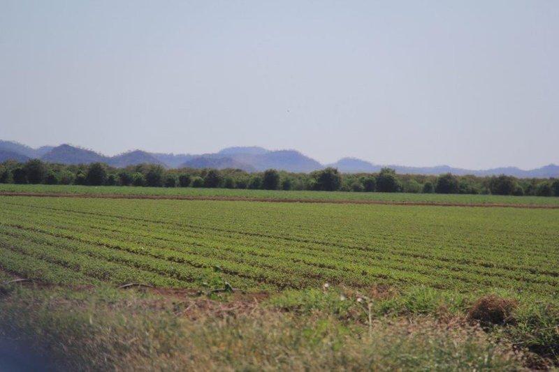 Nor Paarl winelands but Sandalwood outside Kununurra