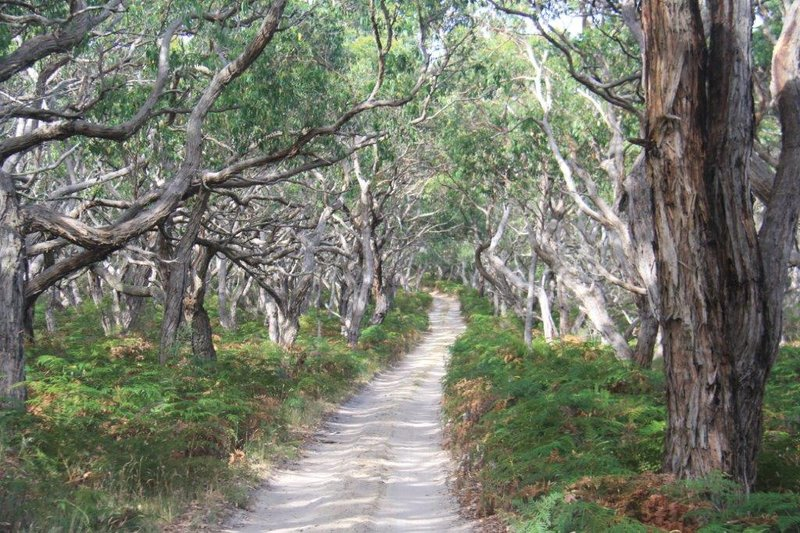One of our narrow drives in Great Otway National Park