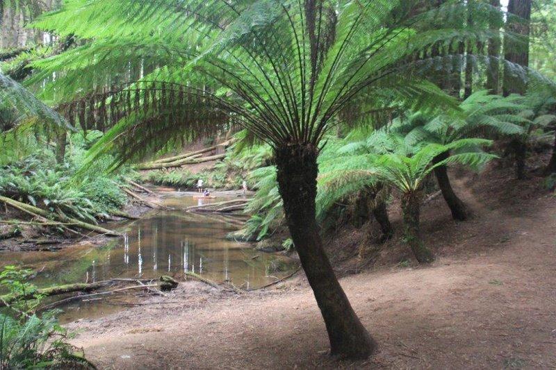 Rain forest walk