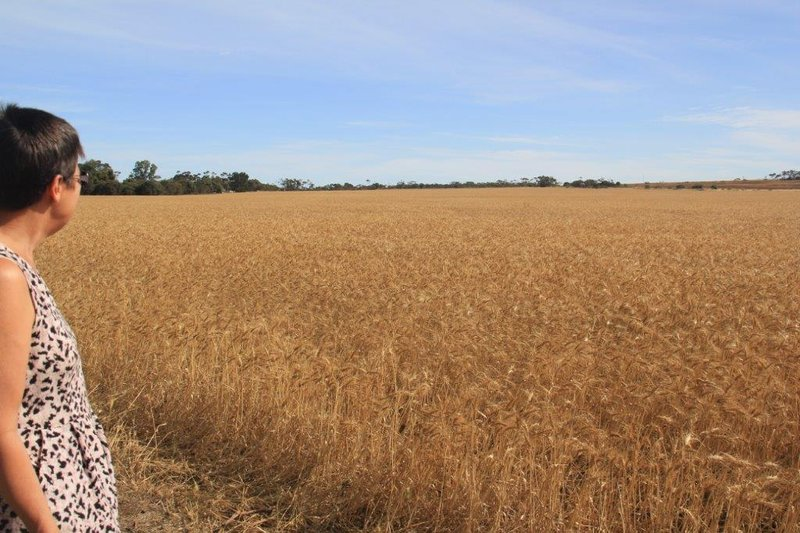 Record wheat year evident everywhere