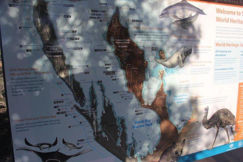 Shark Bay is home to stromatolites shells and Monkey Mia
