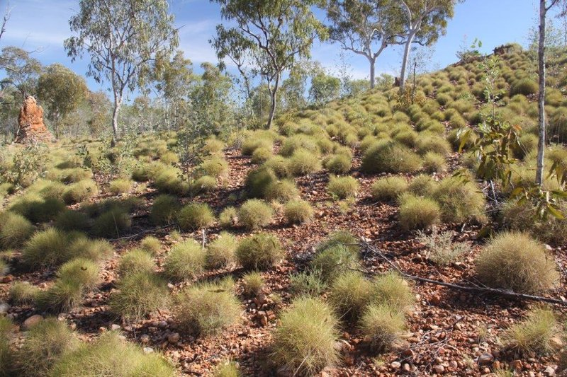 Spinifex grass can be beautiful