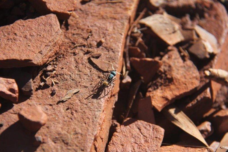 Strange ants
