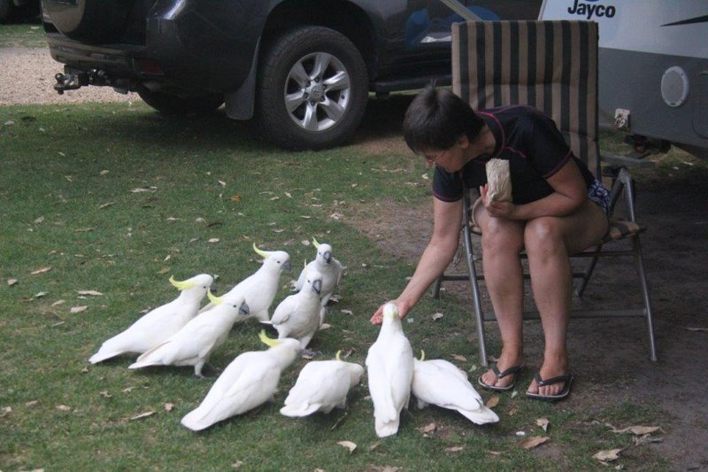 Sulpher Crested Cockatoo picnic