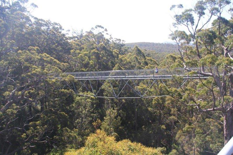 Tree top walk is 40m high