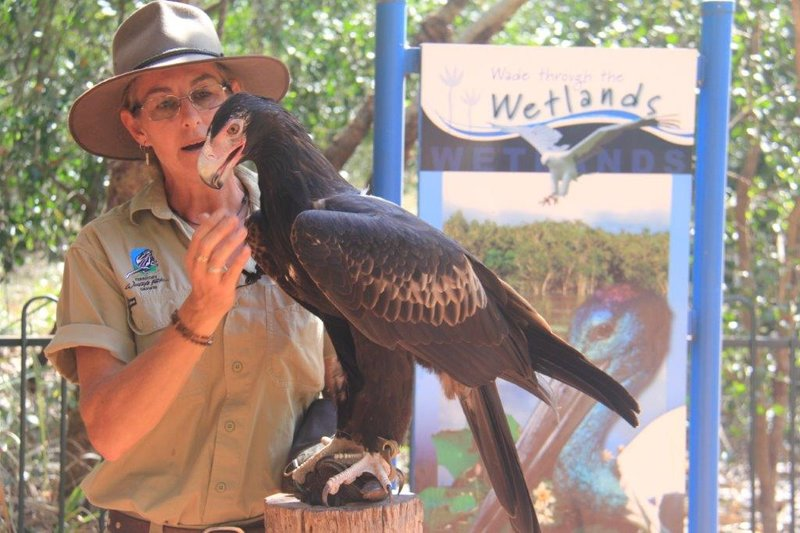 Wedge tail eagle is our biggest