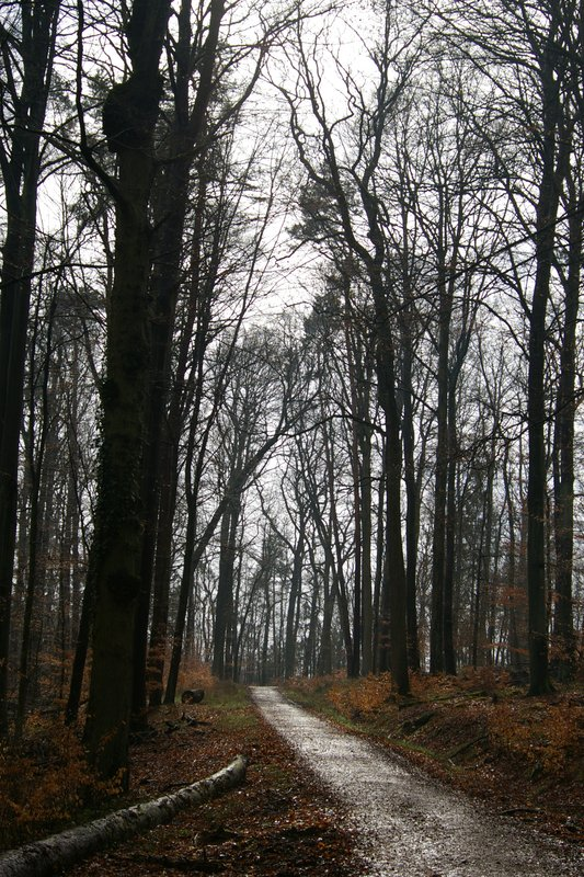 Forest in Idstein