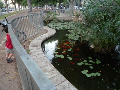 Sderot Coy Pond