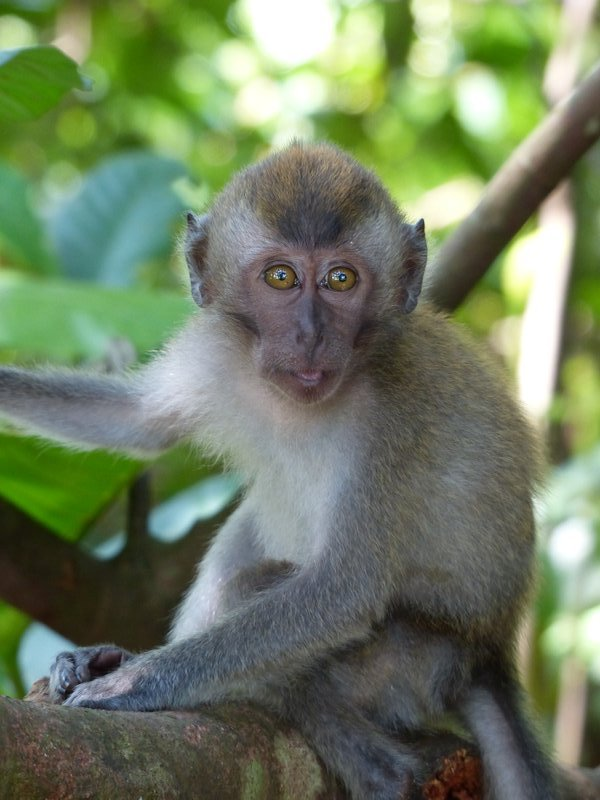A young monkey