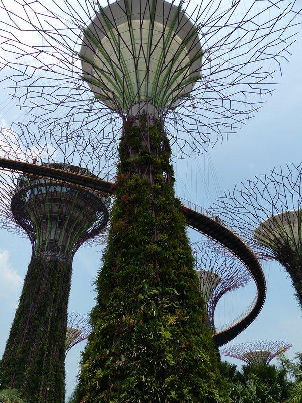 ^ The 'tree top' walk