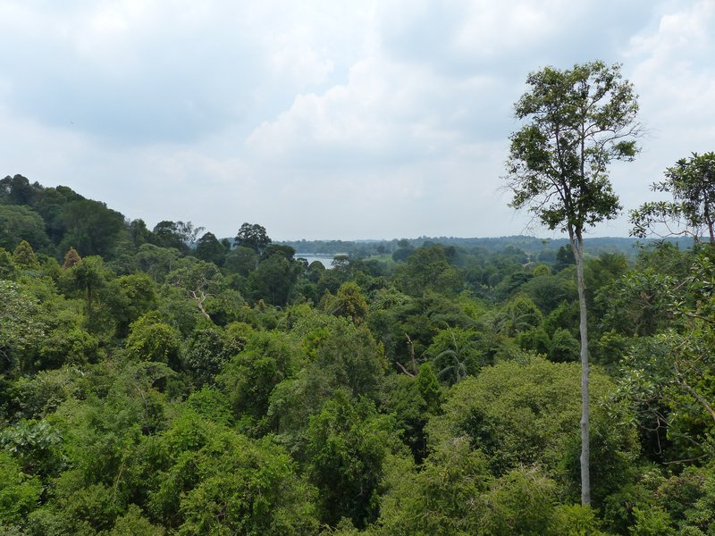 The view from the tree top of the jungle; we had to climb up there