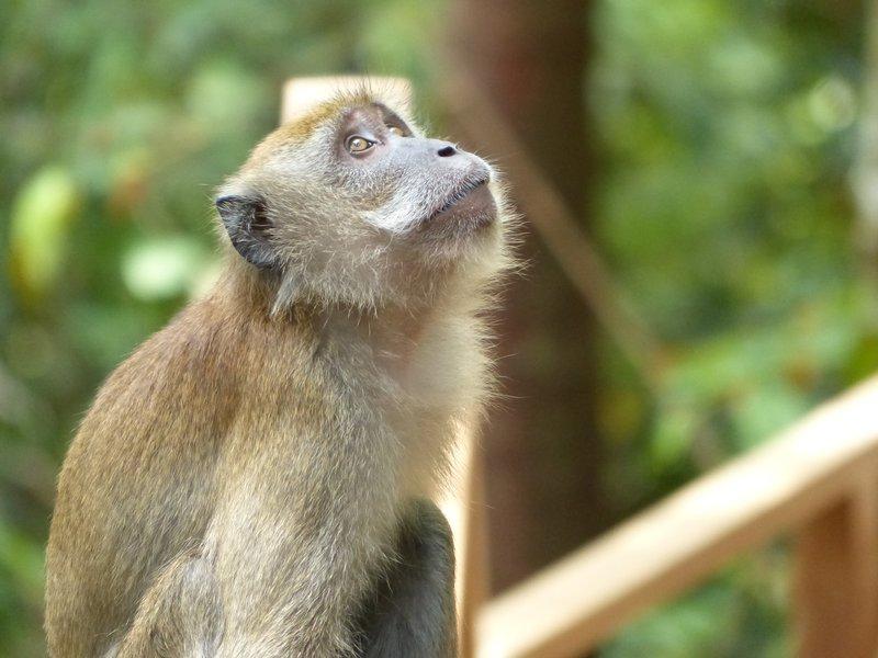 A pensive monkey