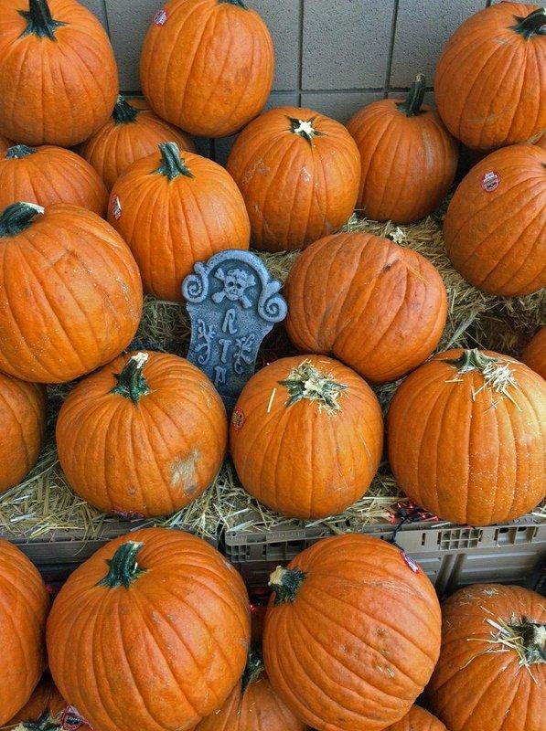 large_PumpkinsA.jpg