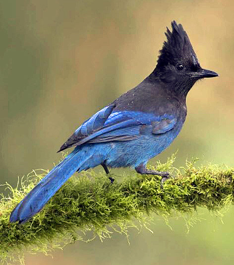 Stellar Snip Bird A