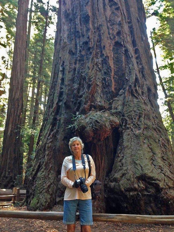 large_iPhone_Big..ll_redwoods.jpg