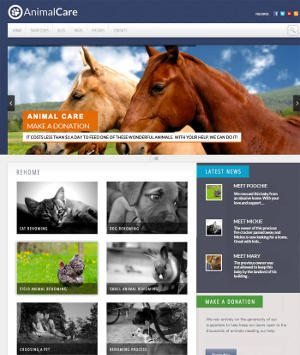 animal-website-design