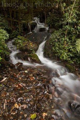 Forest_cascade.jpg