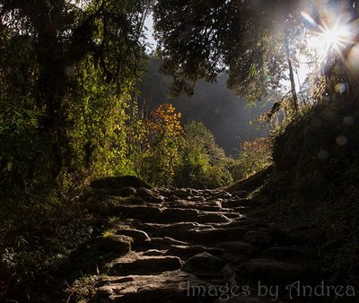 Forest_trail.jpg