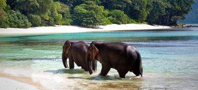 elephant-island-andamans.jpg