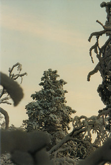 Lapland - detail