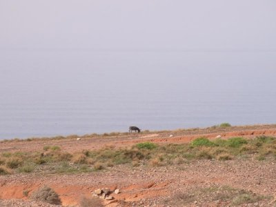 Sidi Ifni - a burro at the cliff line 2011