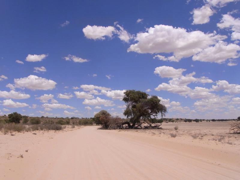 Kalahari - dessert 2013