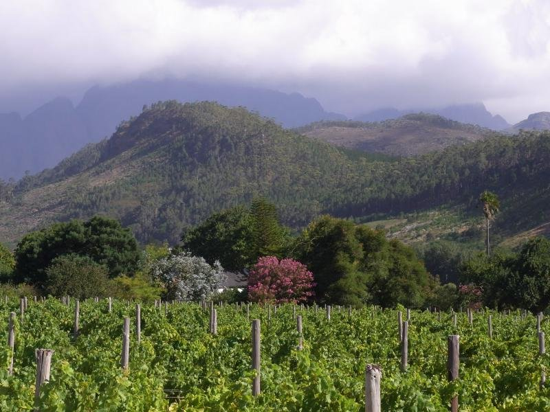 Franshoek - Vineyard 2013