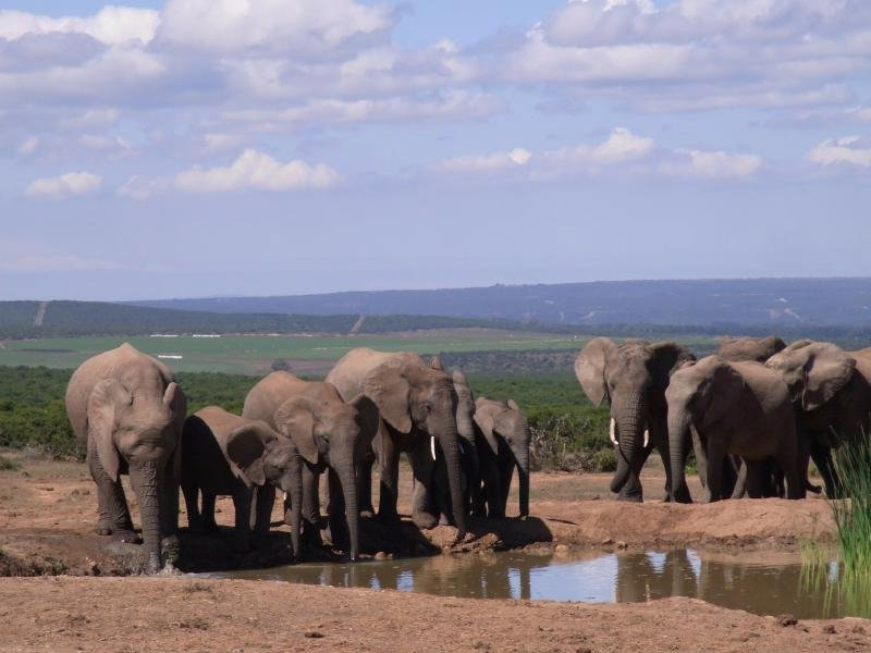 Addo - Elephants 2013