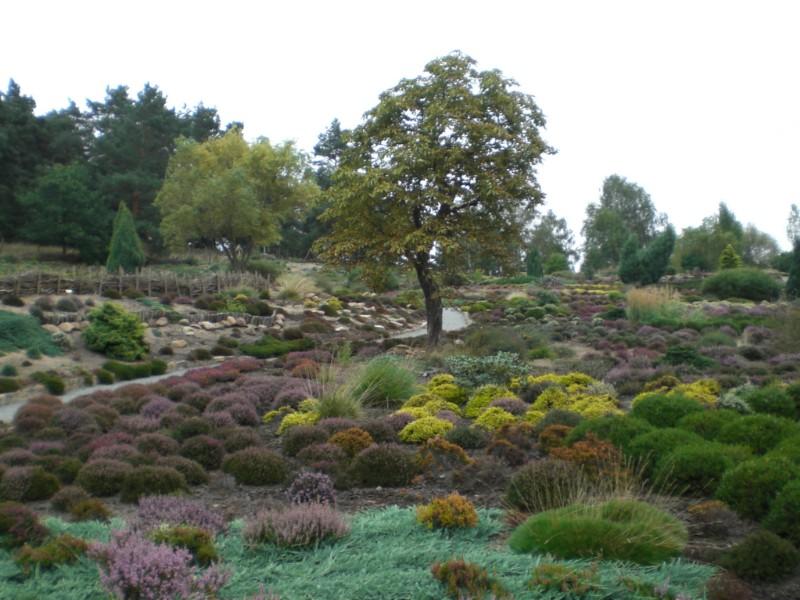 Gommern - Heidegarten