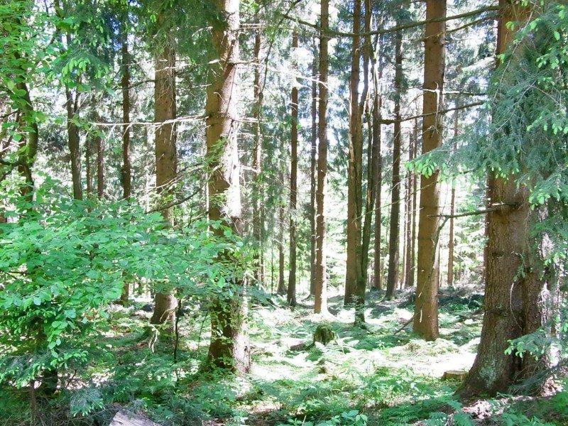 Wood  nearby Bad Lobenstein - 2010