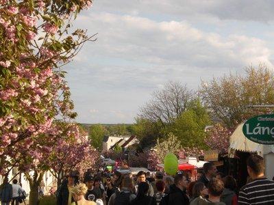 Werder Baumblütenfest 2008