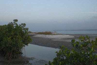 Delta du Saloum - Sunset between mangroves 2009