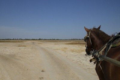 Delta du Saloum - horse ride 2009