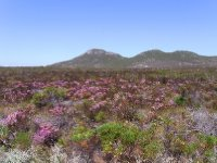 Cape of good hope - wild flowers 2013