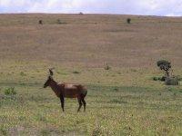 Addo - one Kudu 2013