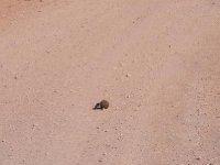 Addo - Dung Beetle and dung 2013