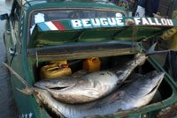 Saint-Louis - fresh fish transport 2009