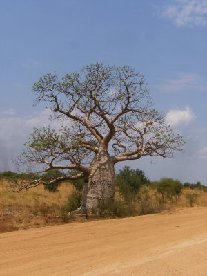 Boab_Trees__1_.jpg