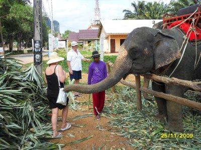 Elephant_Trek__163_.jpg