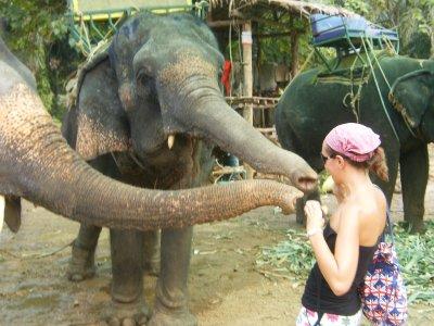 Elephant_Trek__85_.jpg