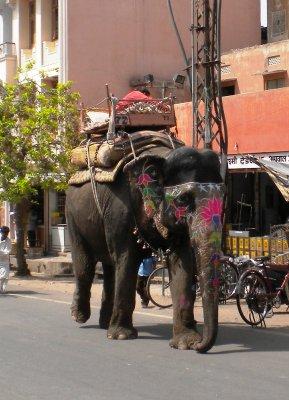 Jaipur_-_S..nt___1_.jpg