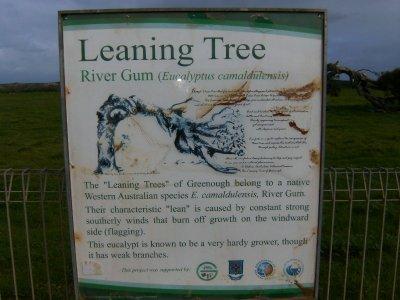 Leaning_Tree__4_.jpg