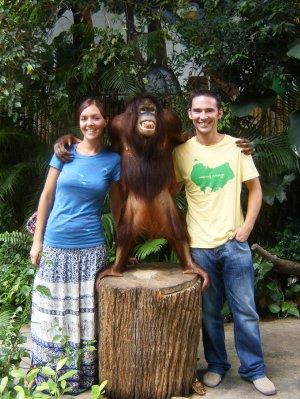 A gorgeous Orangutan