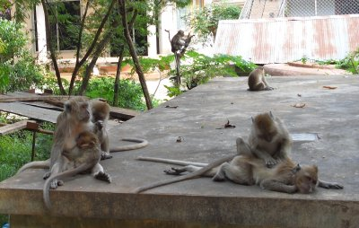Monkey_Temple__47_.jpg