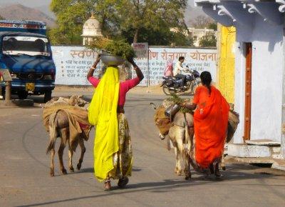 Udaipur_-_Donkeys__1_.jpg
