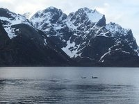 Orcas visiting Reine Fjord