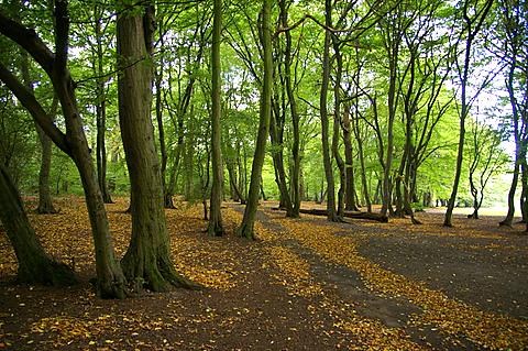 Cherry Tree Woods