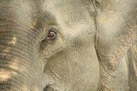 Yala_Natio..k_Elephant_.jpg